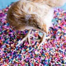 Chaos 'n' Sprinkles.