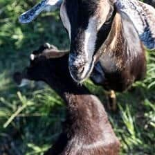 Everyone...It's Time to Meet the Goats (PHOTOS!)!