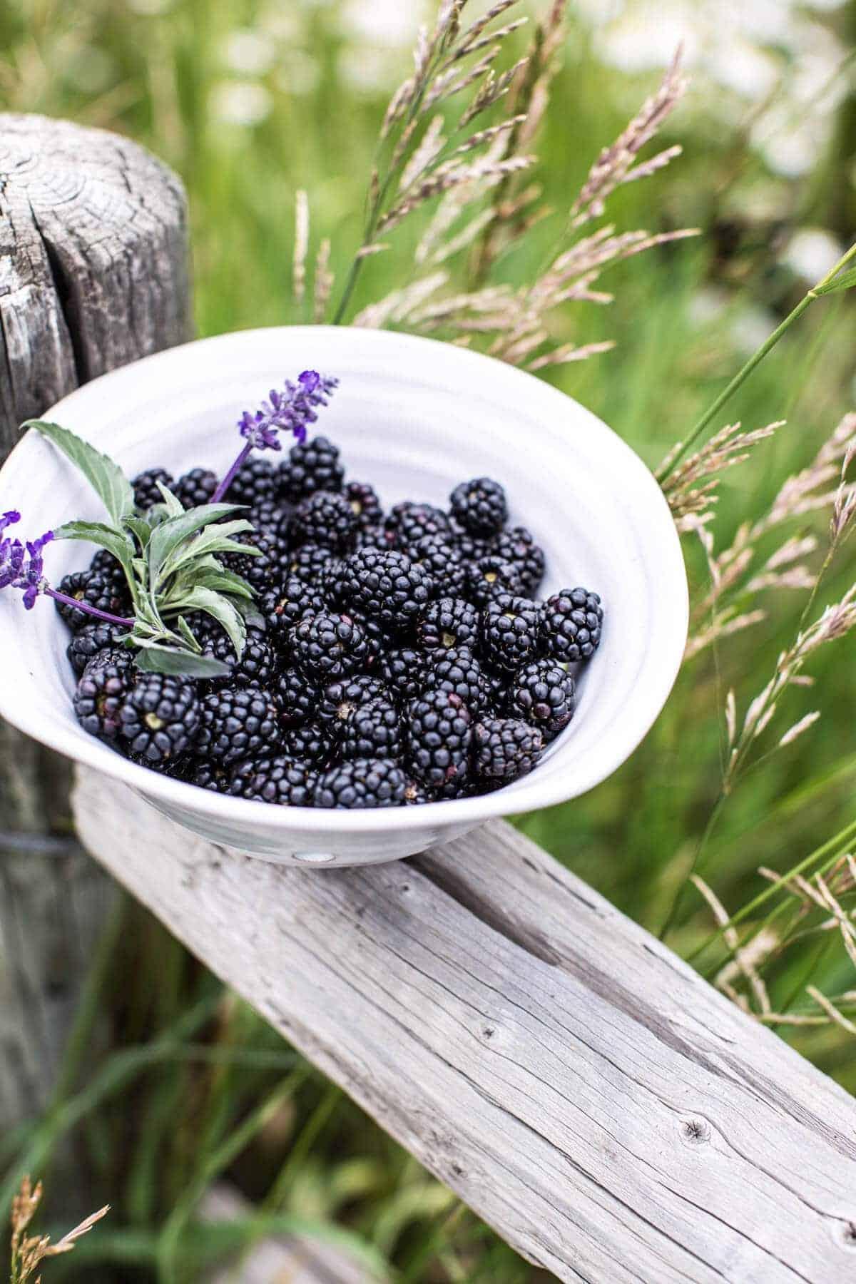 Blackberry Lavender White Chocolate Scones. - Hifow ...