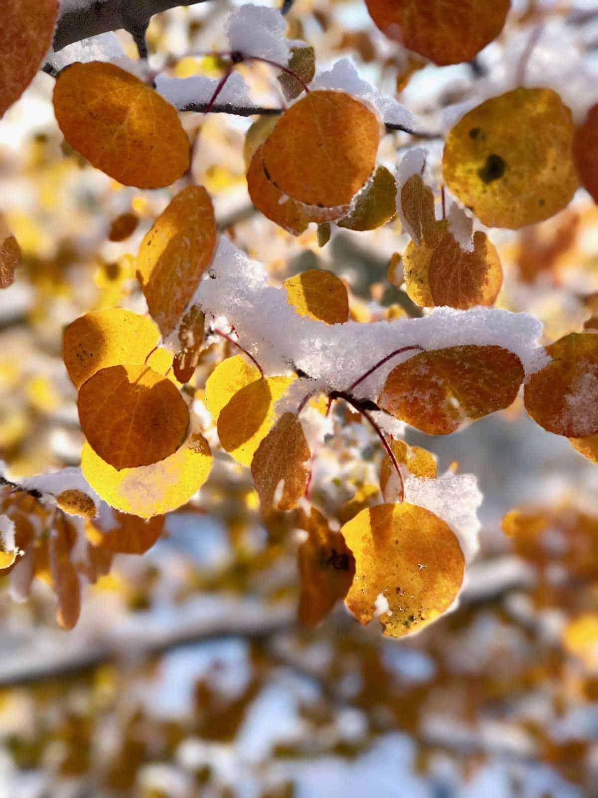 Snow Covered Fall Leaves | halfbakedharvest.com @hbharvest