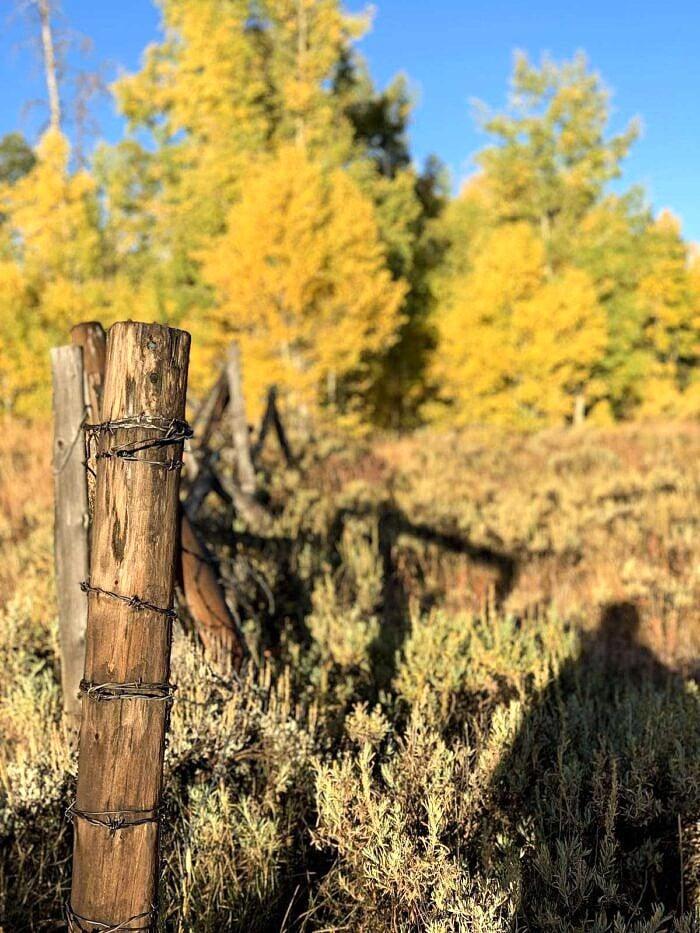 autumn leaves in Colorado